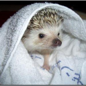 Полотенца, халаты