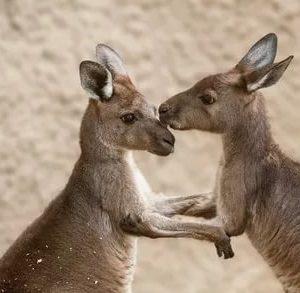 Рюкзаки-кенгуру, слипы